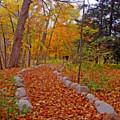 A Walk Along Natures Path by Kay Novy
