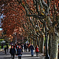 A Walk In The Park - Valencia by Mary Machare