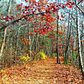 A Walk In The Woods  by Jane Merrit