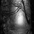 A Walk In The Woods by Simon Garratt