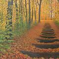 A Walk In The Woods by Steve Langenecker