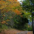 A Walk In The Woods by Teresa Mucha