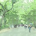 A Walk Through Central Park by Jennifer Frechette