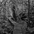 A Walk Through The Willowbrae Rainforest Black And White by Adam Jewell