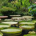 A Water Garden by Byron Varvarigos