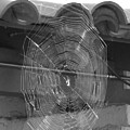 A Web In Sun In Black And White by Colleen Cornelius