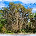 A Well Dressed Oak by John M Bailey