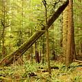 A Whisper In The Rainforest by Carol Groenen