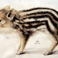 A Wild Boar Piglet by Hans Hoffmann