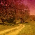 A Winding Road - Bayonet Farm by Angie Tirado