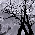A Winter Night Silhouette by Hazel Holland