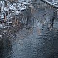 A Winter Swim by Laura Costa