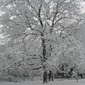 A Winter Touch by Carla Fionnagain