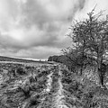 A Winter Track by Nick Bywater
