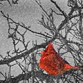 A Winter Wonder by Kenneth Krolikowski