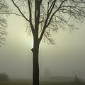 A Winter's Day In The Fog by Patricia Hofmeester