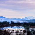 A Winters Fog by Michael Scott