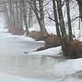 A Winter's Scene by Karol Livote