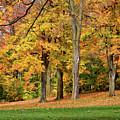 A Wonderful Walk In The Park by Maria Keady