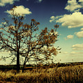 A Yellow Tree In A Middle Of A Dry Field - Wide Angle by Idan Badishi