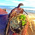 Abalone On Saddle by JoJo Brown