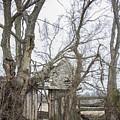 Abandoned Barn by Carolyn Fox