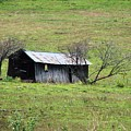 Abandoned Barn  Close Up by Brenda Purvis