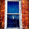 Abandoned House Window With Vines by Cassie Peters