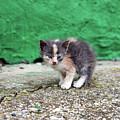 Abandoned Kitten On The Street by Goce Risteski
