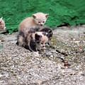 Abandoned Kittens On The Street by Goce Risteski