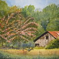 Abandoned Mimosas by Shirley Braithwaite Hunt
