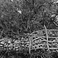 Abandoned Minorcan Country Gate by Pedro Cardona Llambias