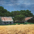 Abandoned Old Shack And Barn In Wheat Field by Anna Louise