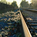 Abandoned Tracks by Photos  By Zulma