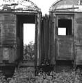 Abandoned Train Cars B by John Myers