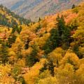 Ablaze With Autumn Glory by Nancy De Flon