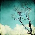 Above The Clouds by MingTa Li