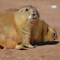 Absolutely Adorable Prairie Dog With  A Friend by DejaVu Designs