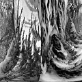 Abstrace Snow Pines by Robert G Kernodle