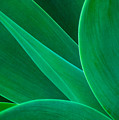 Abstract Agave Plant by Colin Radford