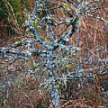 Abstract And Lichen by Marilyn Hunt