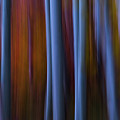 Abstract Aspens by James Bailey