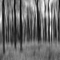 Abstract Autumn Bw by Michael Ver Sprill