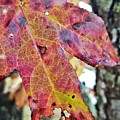 Abstract Autumn Leaf 2 by Maria Urso