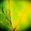 Abstract Autumn Leaves  by Raimond Klavins