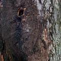 Abstract Bark 14 by Anna Villarreal Garbis