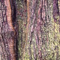 Abstract Bark 3 by Anna Villarreal Garbis