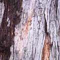 Abstract Bark 8 by Anna Villarreal Garbis