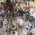 Abstract Birch by Terry Davis
