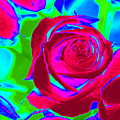 Burgundy Rose Abstract by Karen J Shine